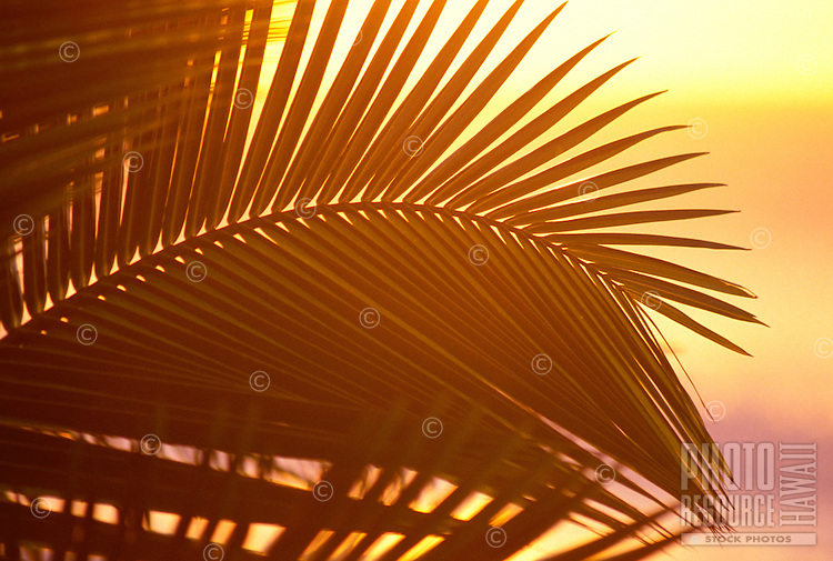Light from the sunset shining through the leaves of a plant