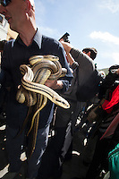Europe,Italy,Abruzzo,Cocullo the people show their confidence with the snakes before offer them to San Domenico