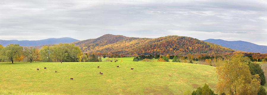 Farm in Albemarle County, Va. Photo/Andrew Shurtleff