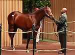 17 September 2011  .Hip #1156 Speightstown - Rhum colt sold for $200,000.