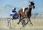 Nelson Harness Races Winter Cup Festival