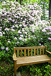 A formal wooden bench sits beside a woodland path, backed by a massive rhododendron covered in pale purple blooms at the Dunn Gardens, a former private estate near Seattle now run as a woodland botanical garden and available for touring by appointment and fee.