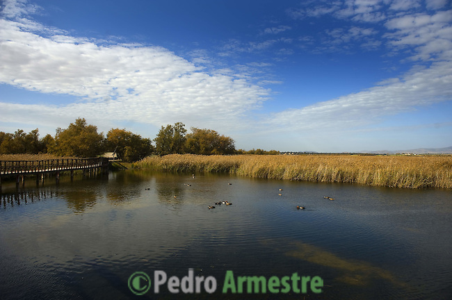A general view of the national park of Las Tablas de Daimiel is pictured  in Ciudad Real on November 16, 2009. The European Union launched an investigation into Spanish wetland that has turned bone dry through mismanagement of water resources  from areas where fish once swam. The EU wants the Spanish government to explain how it plans to save Las Tablas de Daimiel National Park.The park, one of Spain's few wetlands, is classified as a UNESCO biosphere site and an EU-protected area because of its birdlife. But it has been drying up for decades, largely because of wells dug by farmers on the edges of the park to tap an aquifer that feeds the wetland's lagoons. Many of the wells are illegal. Environmentalists call this case a particularly glaring example of how a natural resource can be abused. (c)Pedro ARMESTRE