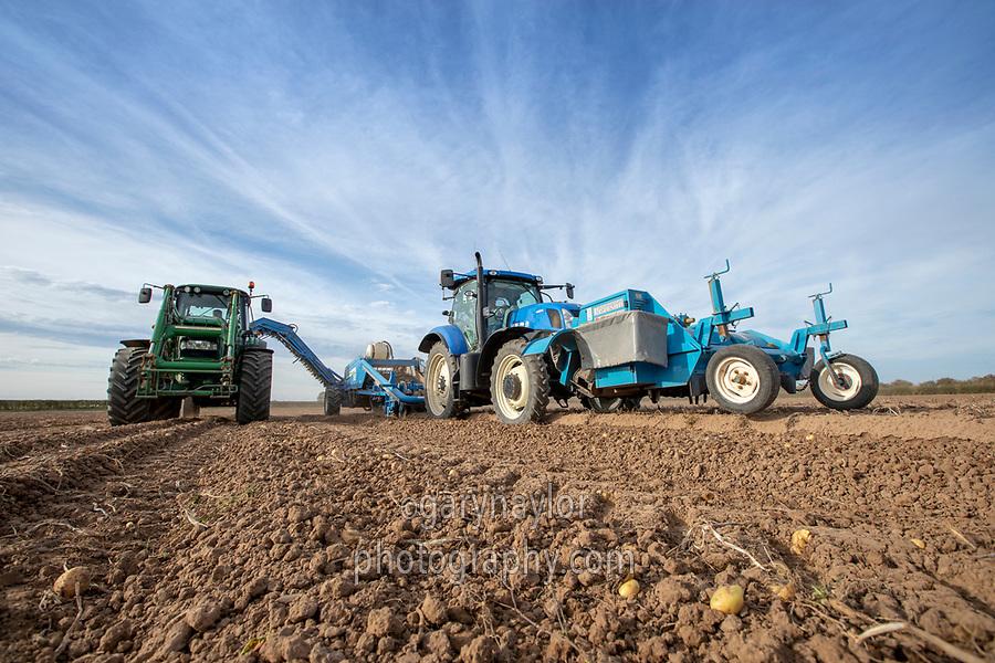 Harvesting potatoes - Lincolnshire, October