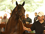 13 July 2010.  Hip #69 Hard Spun - Kew Garden colt.  Sold for $190,000.   Hard Spun's first foals are yearlings of 2010..