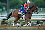 ARCADIA, CA - OCT 31: Beholder, owned by Spendthrift Farm LLC and trained by Richard E Mandella, exercises in preparation for the Breeders' Cup Longines Distaff at Santa Anita Park on October 31, 2016 in Arcadia, California. (Photo by Scott Serio/Eclipse Sportswire/Breeders Cup)