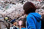 A woman takes a selfie with the cherry blossoms in full bloom at Meguro river in Nakamegurgo on April 1, 2016, Tokyo, Japan. On Thursday, the Japan Meteorological Agency announced that Tokyo's cherry trees were in full bloom, three days earlier than usual, but two days later than last year. Meguro River runs for about 7.82km through Setagaya, Meguro and Shinagawa wards in downtown Tokyo, and many visitors come to see the cherry blossom trees along the river banks in spring. (Photo by Rodrigo Reyes Marin/AFLO)