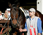 Feb 2010:  Ron the Greek walks around the paddock before the Risen Star Stakes at the Fairgrounds in New Orleans, La.