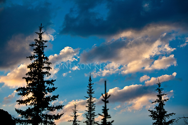 Clouds and tree tops at sunset