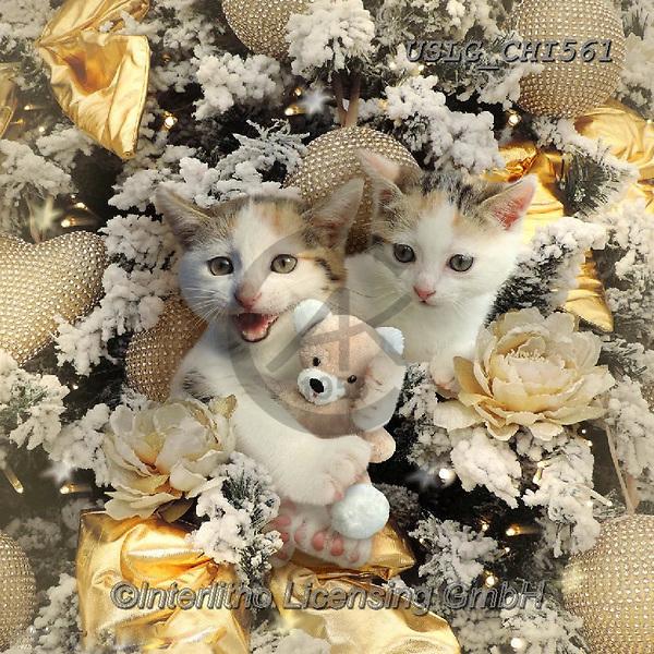 CHIARA,CHRISTMAS ANIMALS, WEIHNACHTEN TIERE, NAVIDAD ANIMALES, paintings+++++,USLGCHI561,#XA# ,funny ,funny
