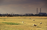Swanscombe Peninsula North Kent Borough of Dartford UK. 1990s. Poor farming land.  Thames Estuary cranes and riverside industry in background.