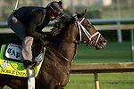 LOUISVILLE, KY - MAY 1: Noble Indy, trained by Todd Pletcher, exercises in preparation for the Kentucky Derby at Churchill Downs on May 1, 2018 in Louisville, Kentucky. (Photo by Eric Patterson/Eclipse Sportswire/Getty Images)