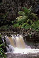 Waterfall and palm tree at the seven pools in HALEAKALA NATIONAL PARK on Maui in Hawaii