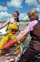 Corrie Morrison (left) and Lisa Krebs, pull in a sockeye salmon on Krebs' setnet site on Egegik River in Bristol Bay, Alaska in June 1996.  Bristol Bay is home to the world's largest sockeye salmon fishery.  The rivers also get a fair amount of chum, king, and chinook salmon.  Bristol Bay is located in the southwest part of Alaska.