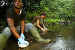 African Golden Cat (Caracal aurata aurata) biologist Laila Bahaa-el-din and Arthur Dibambo sifting through African Leopard (Panthera pardus pardus) scat for comparitive prey base analysis, Arthur is also checking for elephants, Lope National Park, Gabon