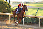 Haynesfield works in preparation for The Breeders' Cup at Churchill Downs. 10.31.2010..photo Ed Van Meter