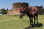 Puerto Plata, Dominican Republic; a donkey wearing flowers poses for tourist photos while standing in front of the Fortaleza San Felipe, this fort was built by the Spaniards in the 16th century and completed in 1577 to defend the North coast of the Dominican Republic from the Dutch, English and French