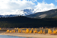 Near Twin Lakes, on the eastern side of Independence Pass.