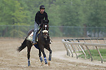 Preakness contender Mr. Commons gallops Thursday morning, May 19, 2011, at Pimlico Race Course in Baltimore, MD. (Joan Fairman Kanes/EclipseSportswire)
