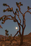 California Desert 4x6 Postcards