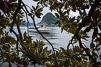 Switzerland. Canton Ticino. Lugano. Tourist boat on Lake Lugano. View from tree's branches on Monte San Salvatore. Lake Lugano (Italian: Lago di Lugano or Ceresio) is a glacial lake. The Monte San Salvatore (912 m) is a mountain in the Lepontine Alps above Lake Lugano and the city of Lugano. 28.05.2019 © 2019 Didier Ruef