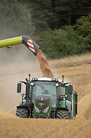 14-8-2021 Harvesting wheat in Rutland<br /> Tim Scrivener Photographer 07850 303986<br /> …..Covering Agriculture In The Uk…..