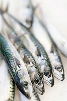 Europe/France/Bretagne/56/Morbihan/Belle-Ile/Le Palais: Détail des étals des femmes des pêcheurs qui vendent la marée du jour- Maquereaux