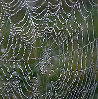 Spider web with morning dew.