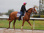October 28, 2015:  Kiss to Remember, trained by Martin Wolfson, and owned by Miller Racing LLC, is entered in the Breeder's Cup Filly & Mare Sprint $1,000,000.  Candice Chavez/ESW/CSM
