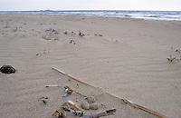 Seeregenpfeifer, See-Regenpfeifer, Nest mit Eiern am Strand, Eier, Ei, gut gertarnt, Tarnung, Regenpfeifer, Charadrius alexandrinus, Kentish plover