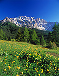 Italy, South Tyrol, Alto Adige, Dolomites, Flower meadow and Latemar Mountain Range (2.846 m)
