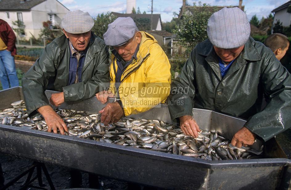 Europe/France/Centre/41/Loir-et-Cher/Sologne/Saint-Viatre : Pêche de l'étang