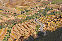 vineyards winding road quinta do noval douro portugal