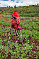 Africa, Rwanda, Kayonza. Women working in agricultural fields. Mobile money has changed the face of small business owners.