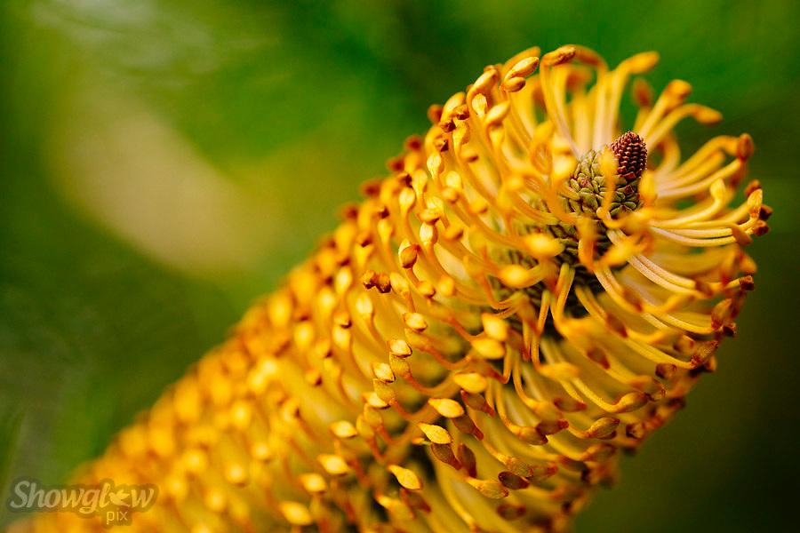 Image Ref: M282<br /> Location: Royal Botanical Gardens, Melbourne<br /> Date: 03.06.17