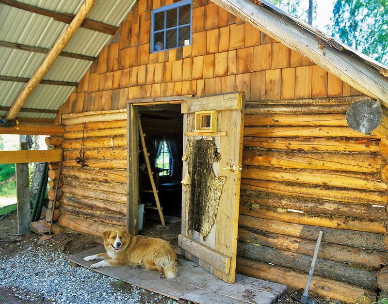 Cabin at Lake George with dog in doorway. Alaska
