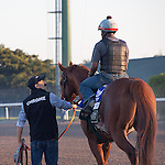 HALLANDALE BEACH, FL - JANUARY 21: California Chrome with exercise rider Dhigi Gladney and groom Raul Rodriguez after putting in their final work in preparation for the Pegasus World Cup at Gulfstream Park. (Photo by Arron Haggart/Eclipse Sportswire/Getty Images