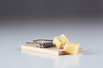 Mouse trap(s).  Generic mouse traps in clean cut, white background.