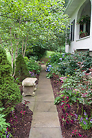 Shade pathway, side of house, walk, hydrangeas, coleus, impatiens, Rudbeckia, roses, cement garden bench, trees, evergreen shrubs, at side of house