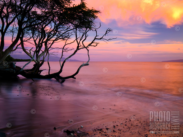Waves reflecting a colorful sunset wash against a fallen tree and sandy shore at a beach in Lahaina, Maui.