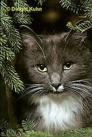CT01-007z  Cat - watching prey
