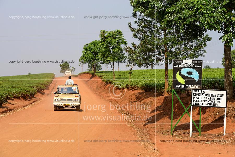 Malawi, Thyolo, Makandi Tea Estate, a fair trade tea plantation