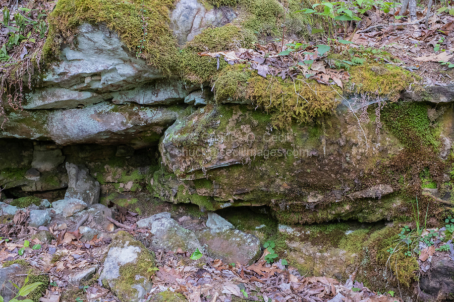 New River Gorge National Park, West Virginia.  Mossy Overhang along the Endless Wall Trail from Fern Creek Trailhead.