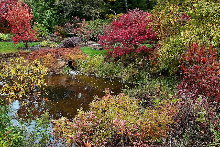Asticou Gardens in autumn, Northeast Harbor, Mount Desert Island, Maine, USA