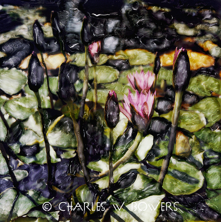 Waterlilies peak through the surface of the pond. Striking patterns of leaves float on the surface of the water.<br /> <br /> -Limited Edition of 50 Prints