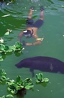 mergulhador e peixe boi da amazÙnia