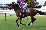 October 02, 2016, Chantilly, FRANCE - Highland Reel with James-Anthony Heffernan up at the Qatar Prix de'l Arc de Triomphe (Gr. I) at  Chantilly Race Course  [Copyright (c) Sandra Scherning/Eclipse Sportswire)