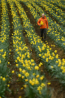 BNPS.co.uk (01202) 558833. <br /> Pic: BNPS<br /> <br /> Pictured: One of the Flowers from the Farm founder's James Cock inspects the daffodil crop<br /> <br /> Flower grower James Cock inspects this year's spectacular display of daffodils he has produced in the 10th anniversary of the Flowers from the Farm co-operative. <br /> <br /> The organisation champions British cut flowers by supporting and encourage growers to produce them for market.<br /> <br /> Over the past 12 months Flowers from the Farm has seen its membership increase by 65 per cent due to the demand of homegrown flowers during the coronavirus pandemic.