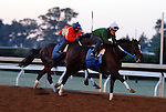 October 18, 2015:  Untapable (outside) works with stablemate Gold Hawk (inside) in preparation for the Breeder's Cup Distaff for trainer Steve Asmussen.  Candice Chavez/ESW/CSM