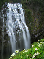 Narada Falls with Cow Parsnip flowers. Mt. Rainier National Park, Washington